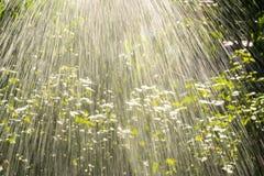 Мочить сад зеленого цвета лета Стоковые Фотографии RF