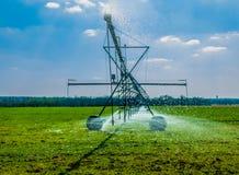 мочить травы Стоковые Фотографии RF