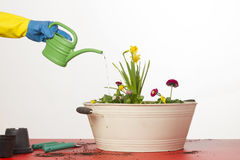мочить цветков Стоковое фото RF