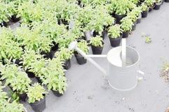 мочить sapling potting стоковая фотография