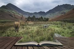 Мощное рогач красных оленей в сцене ландшафта сельской местности смотря ou Стоковое Изображение RF