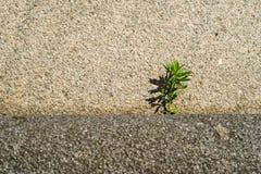 Мощь камня и сила жизни Стоковая Фотография RF