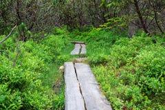 Мощёная дорожка в болоте для людей Стоковая Фотография