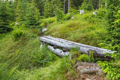 Мощёная дорожка в болоте для людей Стоковые Изображения RF