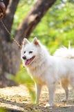 Моя верная собака стоковые изображения rf
