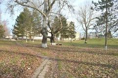 Моя зона в поселении типа города в декабре, солнечная погода, парк за клубом Стоковое Фото