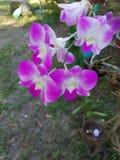 Моя красивая орхидея стоковое изображение rf