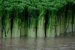 Моя лук-порей в воде Стоковые Изображения