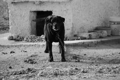 Моя собака Стоковая Фотография
