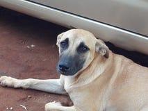 Моя собака стоковая фотография rf