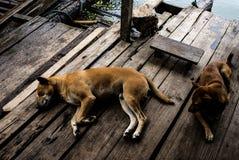 Моя собака Стоковое фото RF