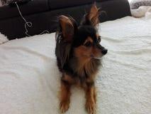Моя собака Стоковые Изображения