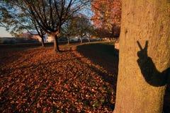 Моя тень руки на дереве Стоковое фото RF