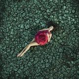 Мода красной розы Стоковое фото RF