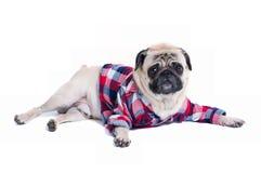 Мода собаки Стоковое фото RF
