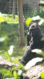 Модельная обезьяна стоковое фото
