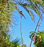 Модельная птица Стоковые Изображения RF