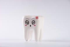 Модельный зуб игрушки в зубоврачевании изолированный на белизне Стоковое Изображение