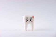 Модельный зуб игрушки в зубоврачевании изолированный на белизне Стоковая Фотография RF