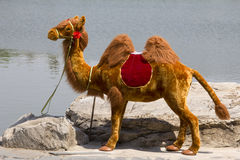 Модель верблюда в утесе на береге Стоковое фото RF