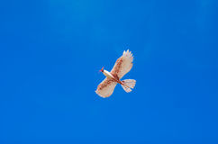 Модель летания птицы в пышном голубом небе Стоковые Изображения