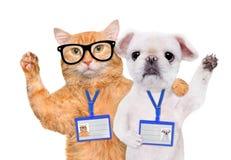 Модель-макет значка пробела носки собаки и кошки белый Стоковые Фото