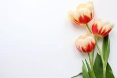 Модель-макет тюльпанов Средства массовой информации social блога столба Стоковые Изображения
