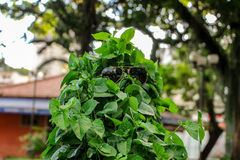 Модель Leafes в солнечных очках Стоковое Изображение