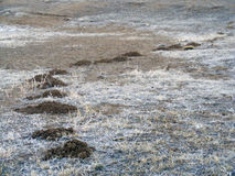 Моли и изображения почвы соответствующие для рекламировать и конструкции логотипа Стоковая Фотография