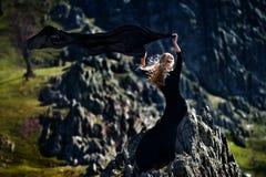 Модная красивая женщина с черным платьем внешним стоковая фотография