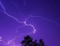 Молния в ночном небе над treetops стоковые фотографии rf