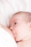 Молоковыведение newborn, newborn кормить грудью Стоковые Изображения