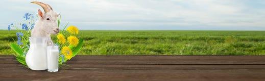 Молоко и солнечное поле весны Стоковая Фотография RF