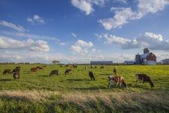 Молочная ферма весной стоковая фотография rf