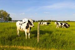 Молочная ферма Стоковые Изображения
