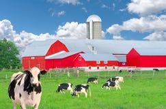 Молочные скоты фермы и страны Стоковое Изображение RF