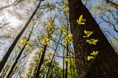 Молодая ветвь Стоковые Фото