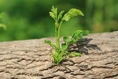 Молодая ветвь Стоковое фото RF