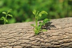 Молодая ветвь Стоковые Изображения