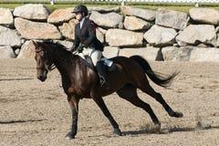 Молодая девушка всадника с лошадью Стоковое фото RF