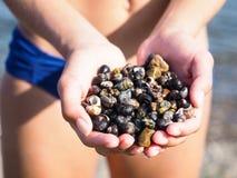 Молодая женская персона с руками полными улиток соленой воды Стоковая Фотография RF
