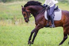 Молодая женщина всадника скакать на лошади залива на луге Стоковое фото RF