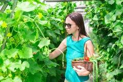 Молодая женщина держа корзину растительности и лука Стоковые Изображения RF