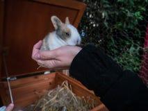 Молодая женщина держа милого кролика младенца Стоковые Фотографии RF