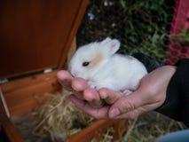 Молодая женщина держа милого кролика младенца Стоковые Фото