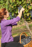 Молодая женщина жать виноградину Стоковое Изображение RF