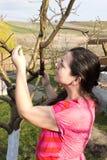 Молодая женщина около дерева стоковые фотографии rf