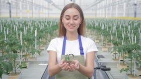 Молодая женщина показывает саженец томата в ее крупном плане рук видеоматериал