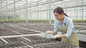 Молодая женщина поля саженцы зеленого салата в парнике на гидропонике внутри помещения сток-видео