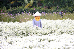 Молодая женщина работая в ее саде на Ханое, Вьетнаме 2-ого декабря 2016 Стоковое Фото